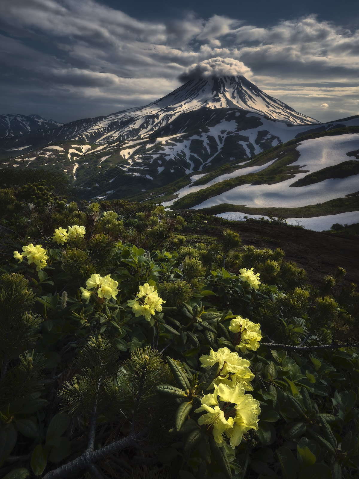 Estratovolcán Vilyuchik con rododendros amarillos en primer plano