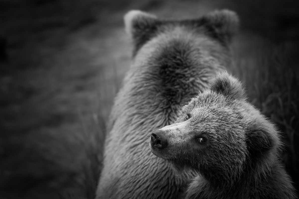 Bear and Her Cub