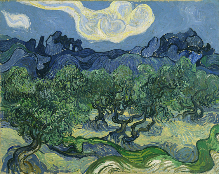 The Olive Trees Van Gogh