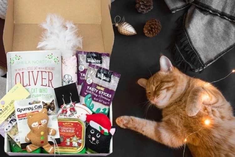 Best Subscription Box for Cat Lovers