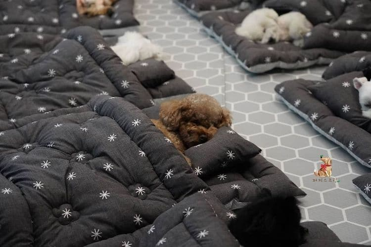 Dogs Sleeping at Doggie Daycare