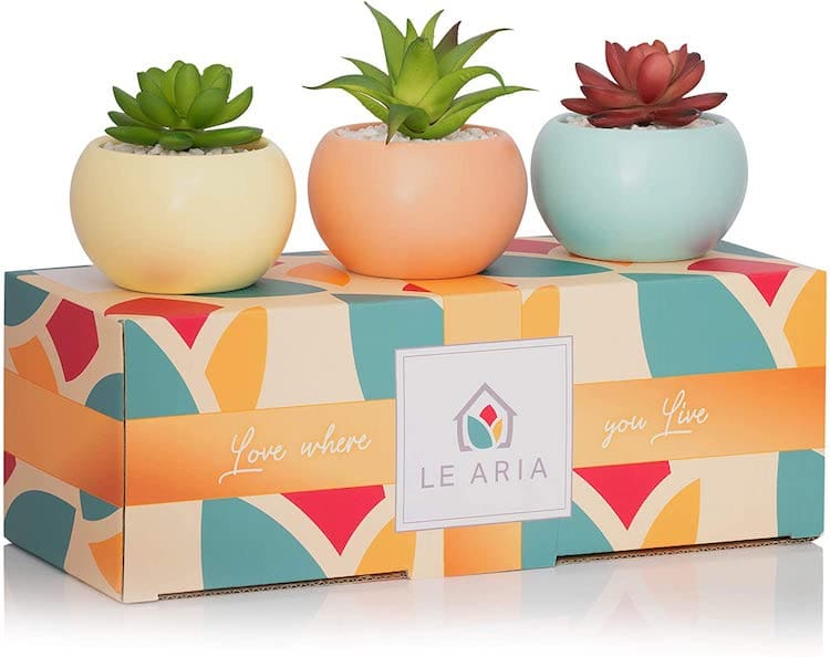 Fake Succulent Plant Set