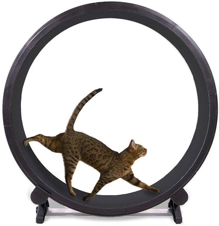 Fast Cat Exercise Wheel