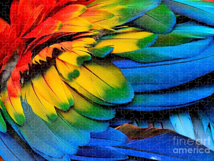 Scarlet Macaw Wing Colorful Puzzle