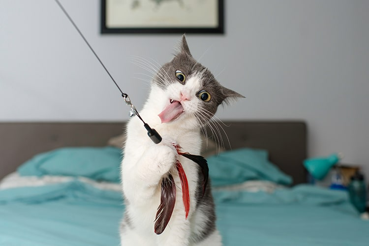 Interactive Cat Toys For Your Pet