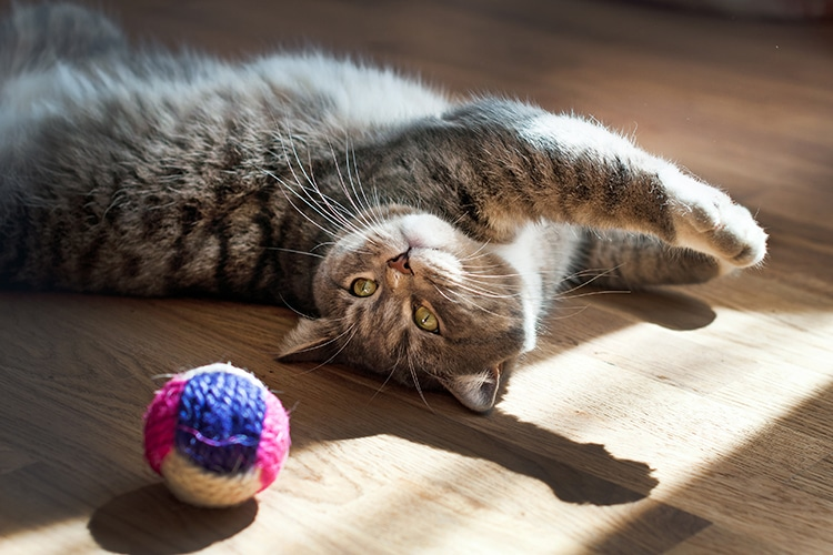 13 Cat Toys To Engage Your Kitty S Brain And Stave Off Boredom