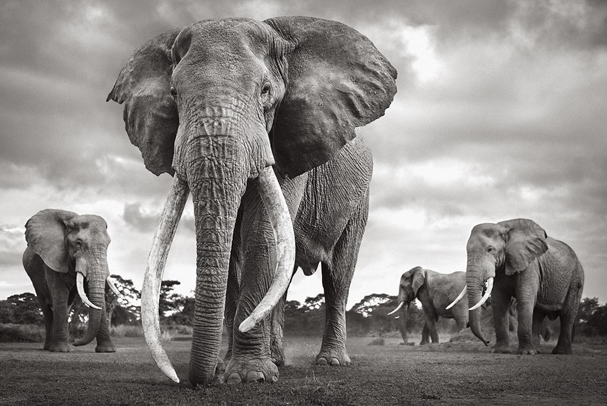 Elephants in East Africa