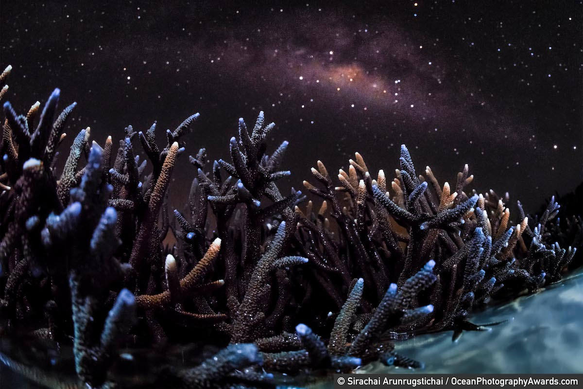 Staghorn corals exposed at low tide with the Milky Way Overhead