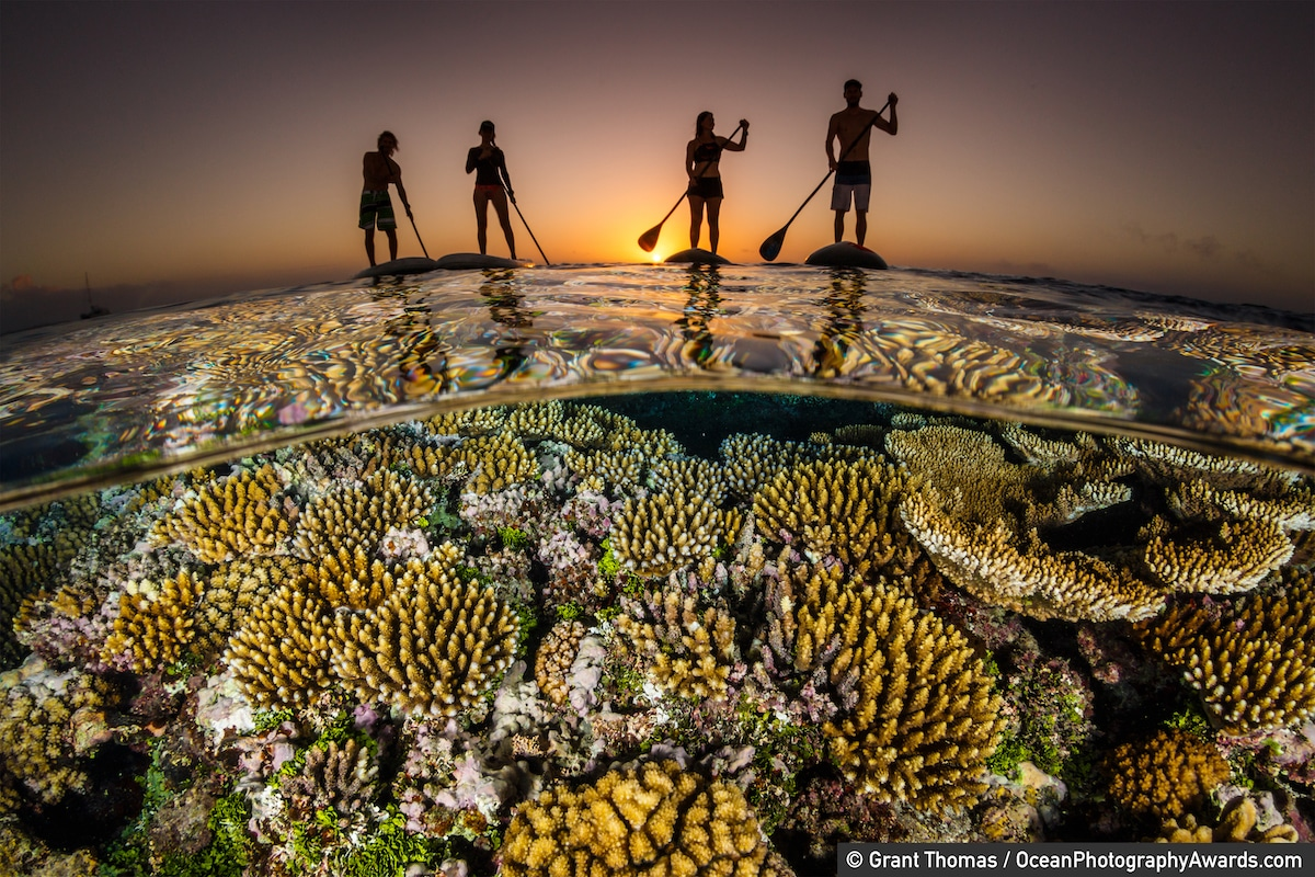 Paddle boarders float above a reef at sunset, Vava'u, Tonga