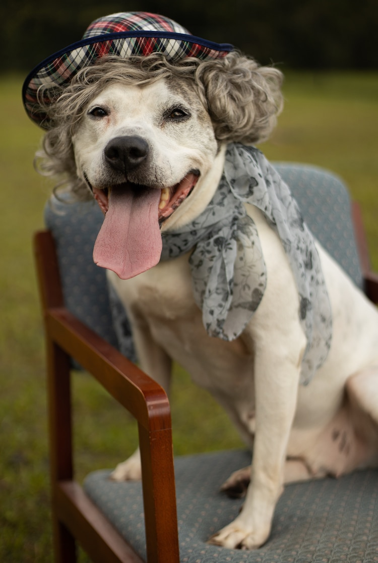 Senior Dog Photoshoot by Flagler Humane Society