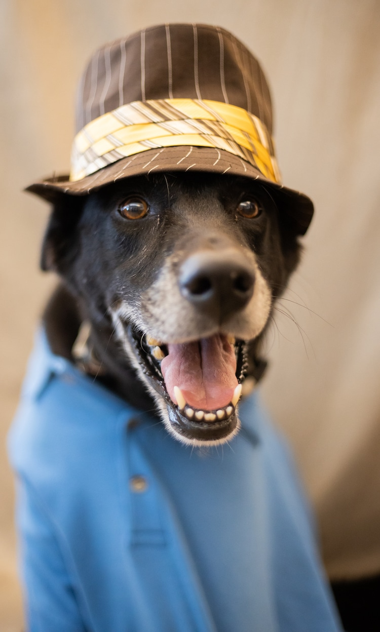 Dogs Dressed as Senior Citizens by Flagler Humane Society