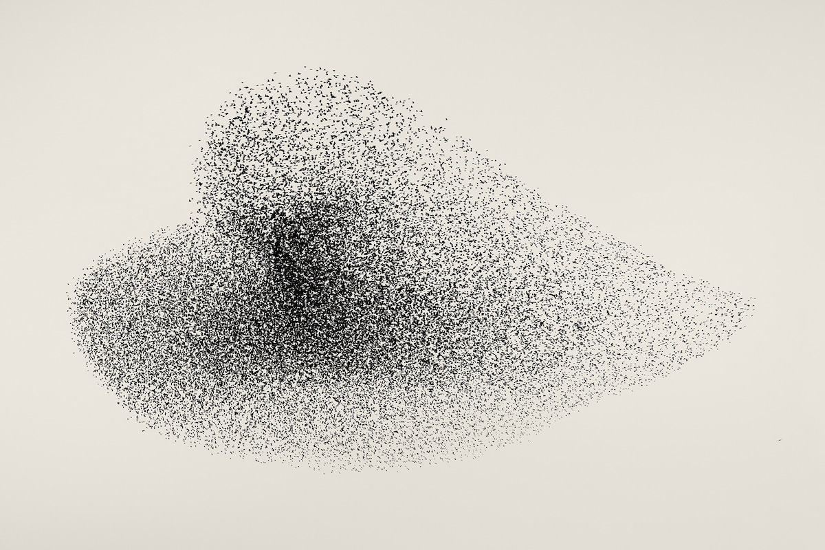 Starlings Making a Heart Formation