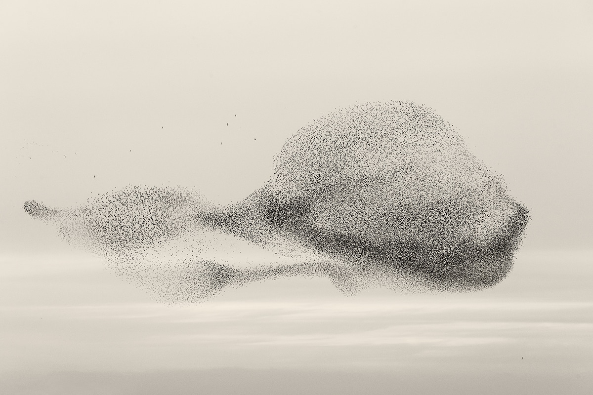 Bird Formation by Soren Solkaer