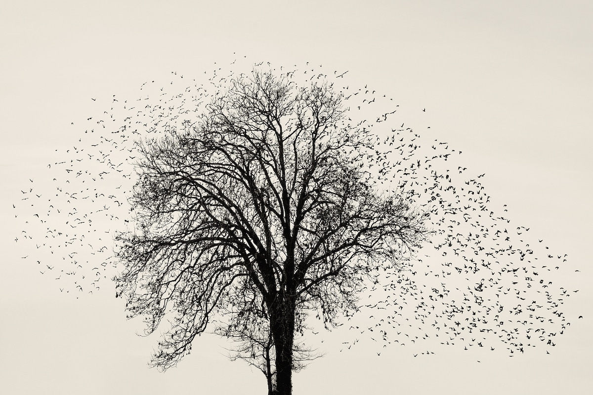 Starling Formations by Soren Solkaer
