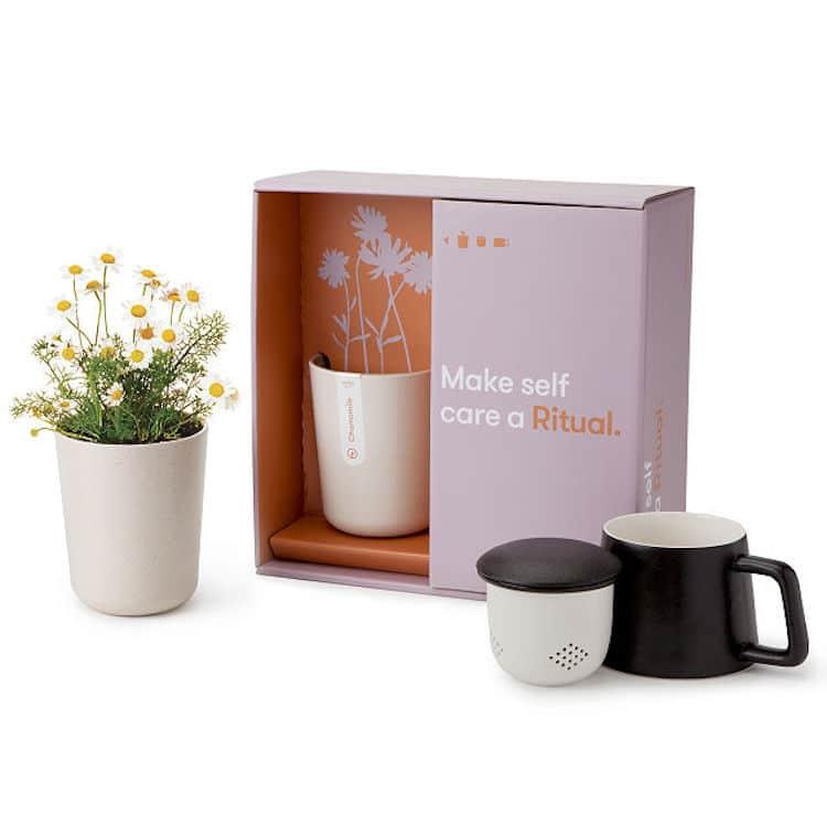 regalos de té