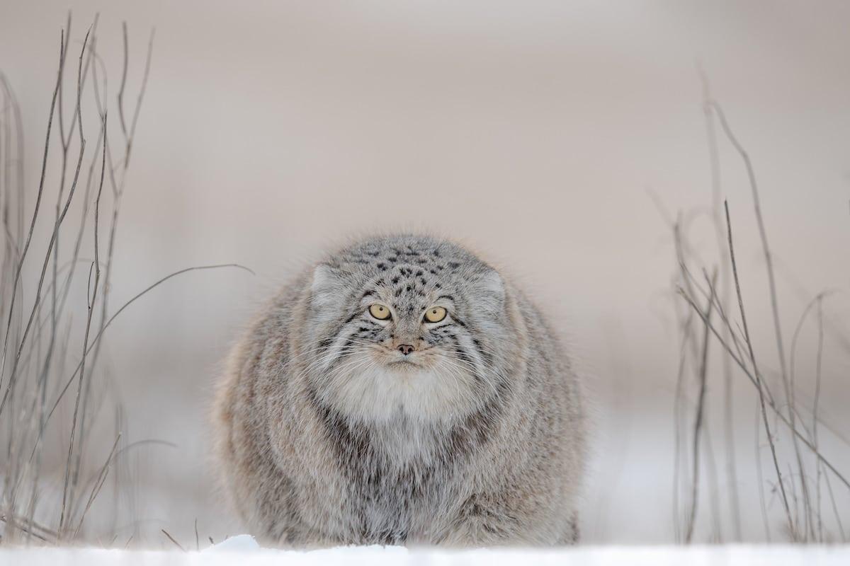 Animal Photography by Joshua Holko