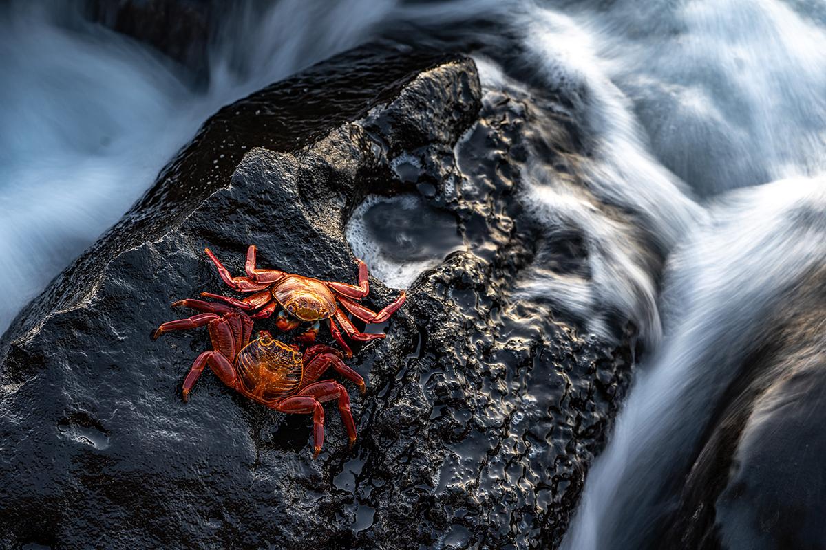 Crabs Galapagos SeaLegacy Ecuadorian Petition