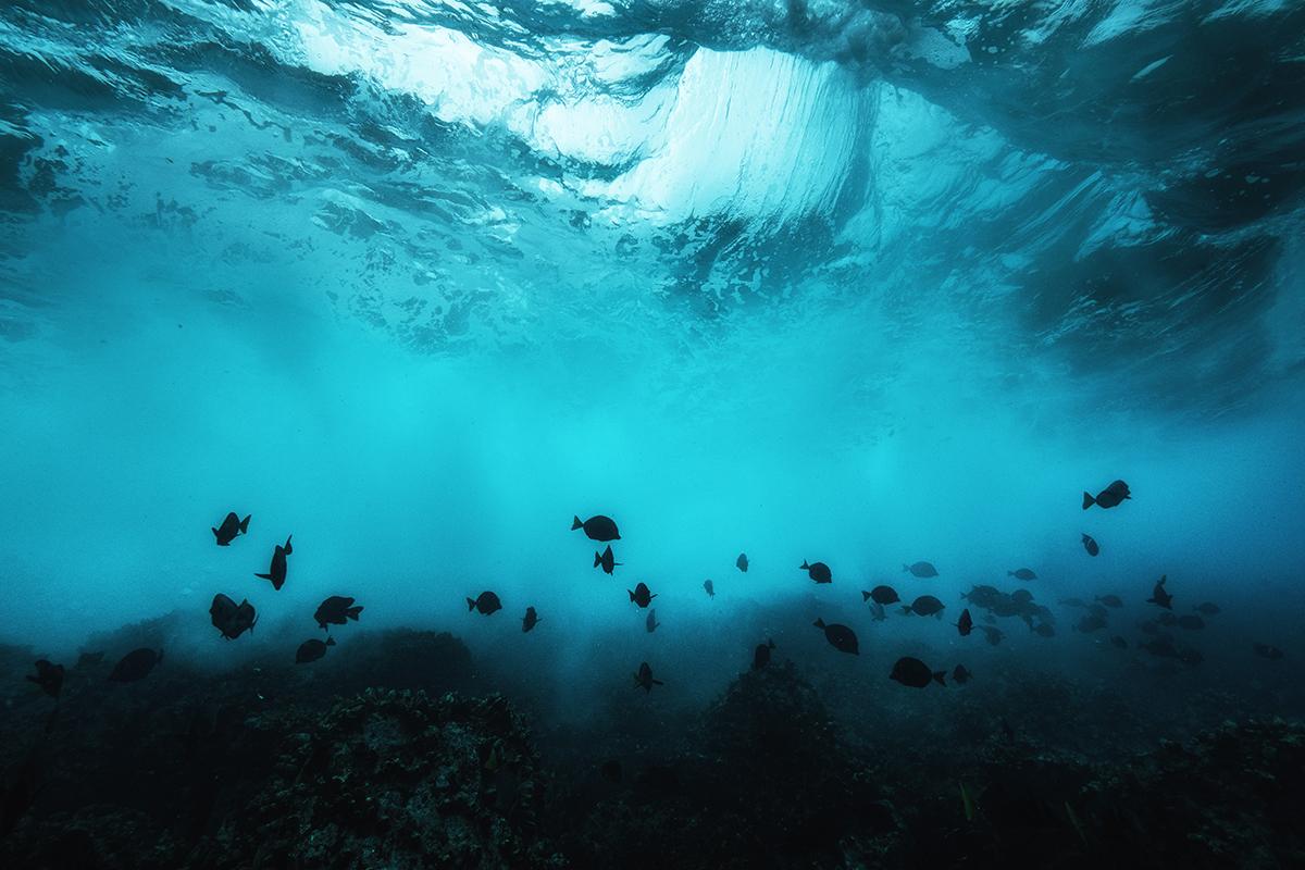 Galapagos Underwater Wildlife Photography Marine Life Conservation