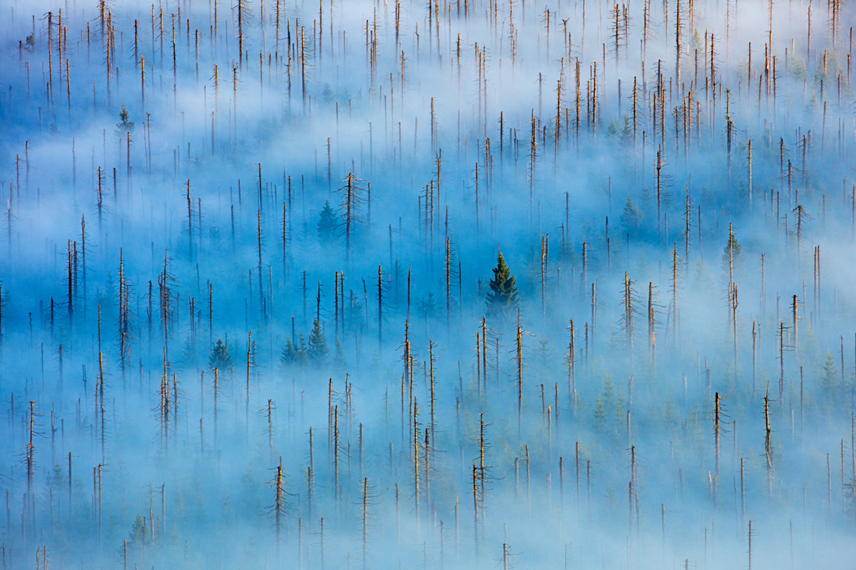 Nature Photographer of the Year Contest