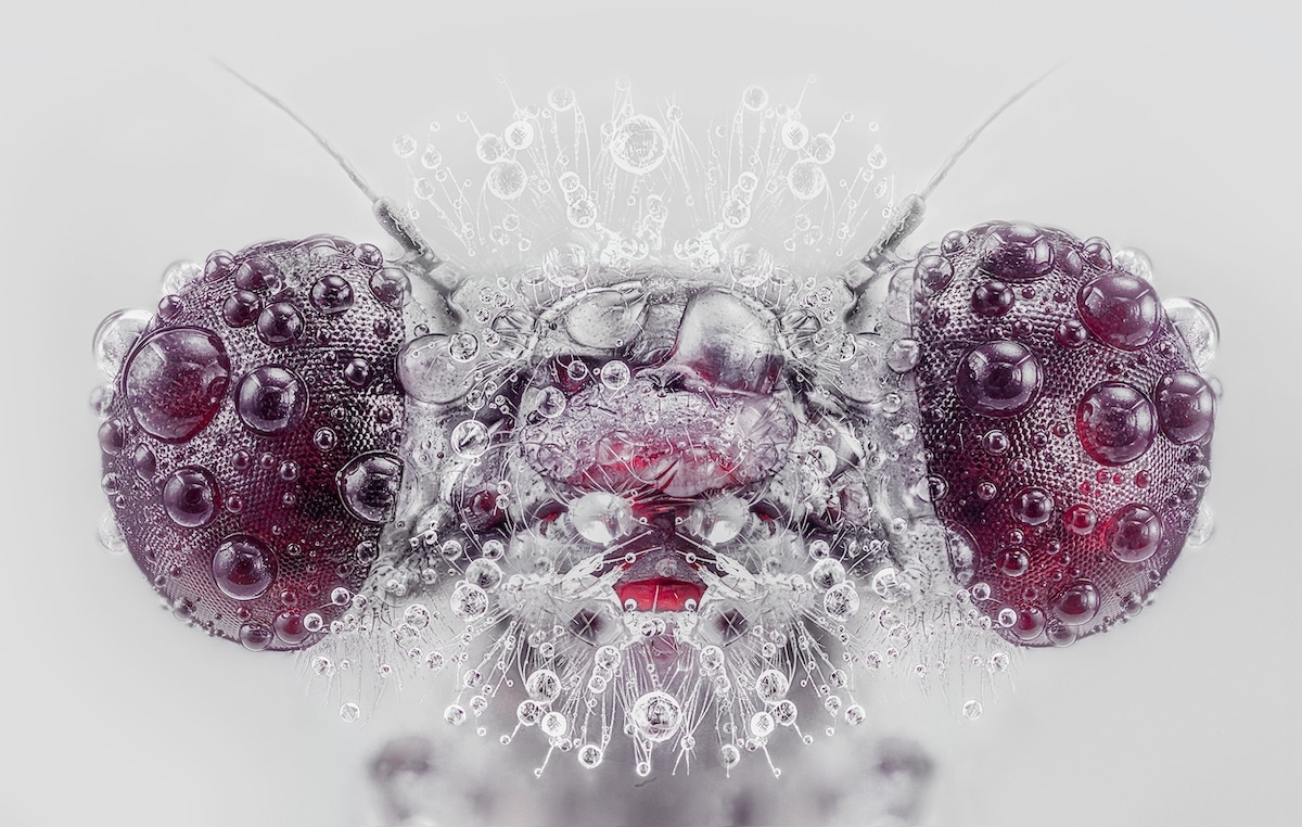 Macro Insect Photography by Pedro Luis Ajuriaguerra Saiz