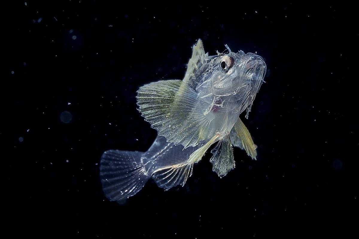 Wu Yung-Sen Underwater Photography