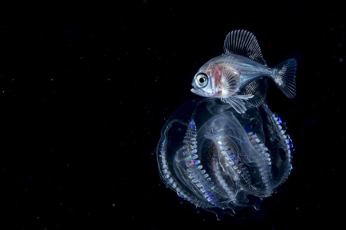 Fish Blackwater Deep Sea