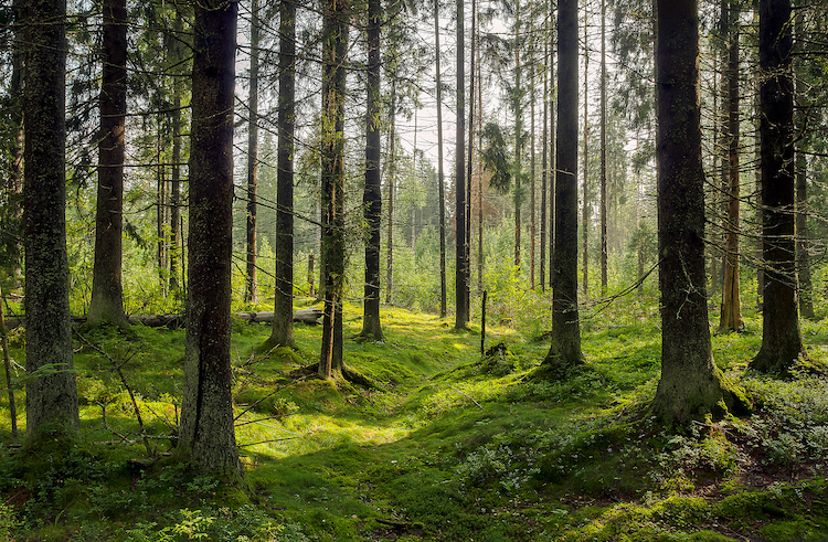 Listen to Forest Sounds on Tree.fm