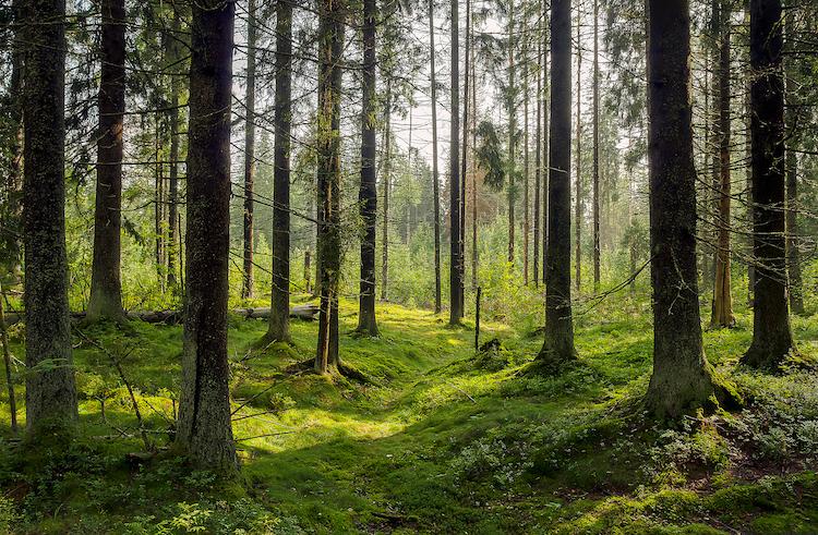 sonidos del bosque en Tree.fm