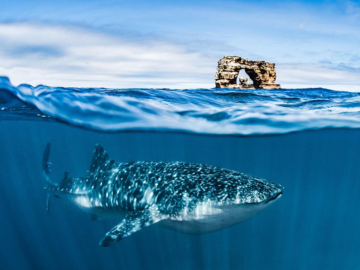 SeaLegacy Galapagos Cristina Mittermeier Shawn Heinrichs Cristina