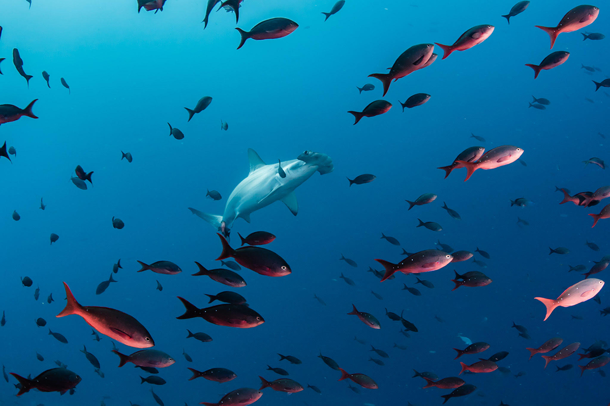 Galapagos petition Ocean Conservation