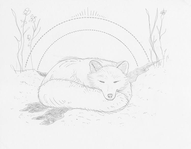 How to Draw a Sleeping Fox