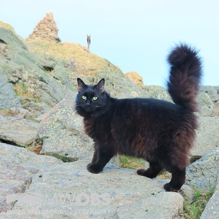 Marty the Cat Mascot for the Mount Washington Observatory