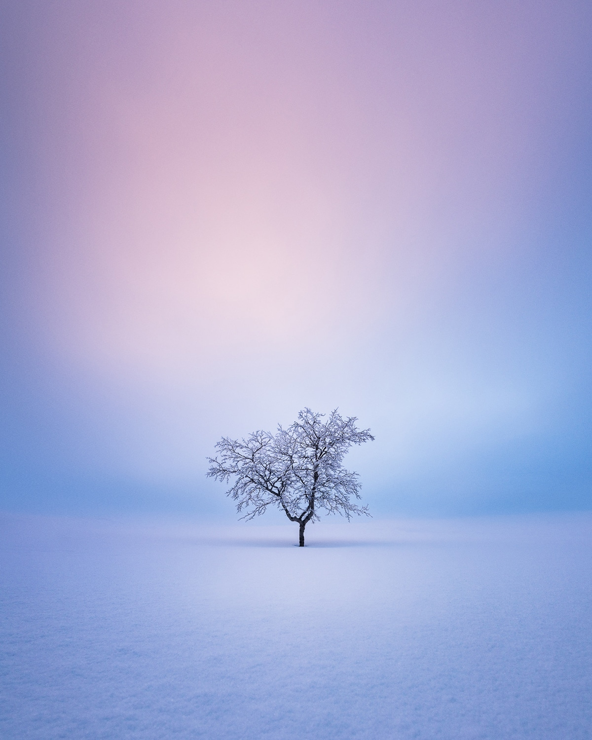 Tree Photograph by Mikko Lagerstedt