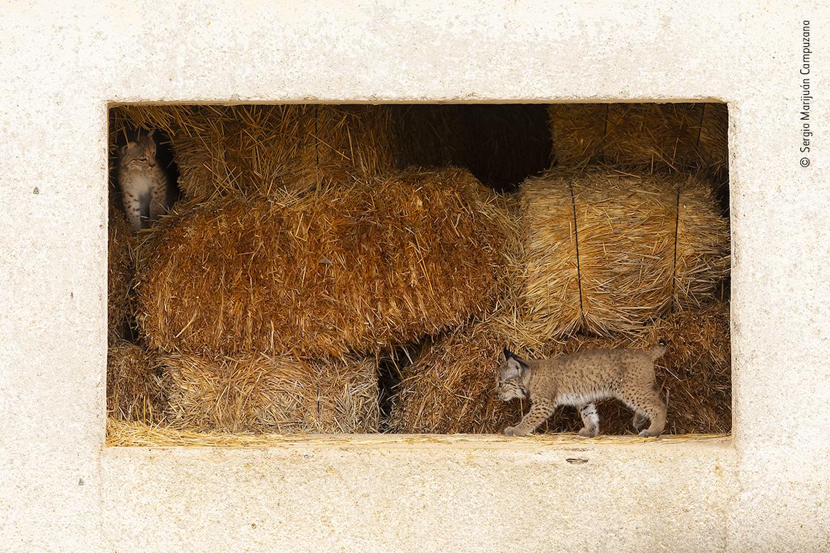 Baby Animal Photography