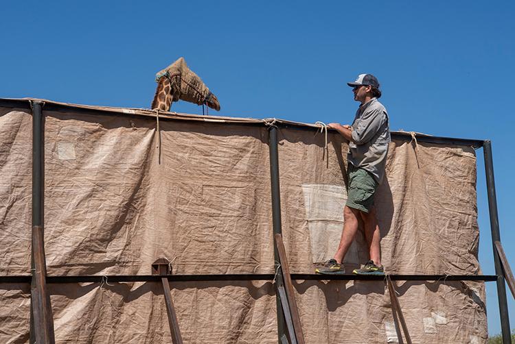 rescate de jirafas