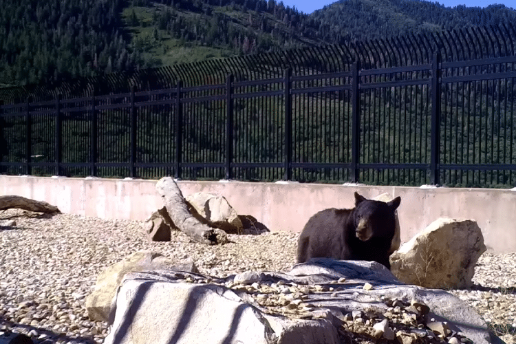 Watch Animals Safely Cross Utah's First Wildlife Overpass
