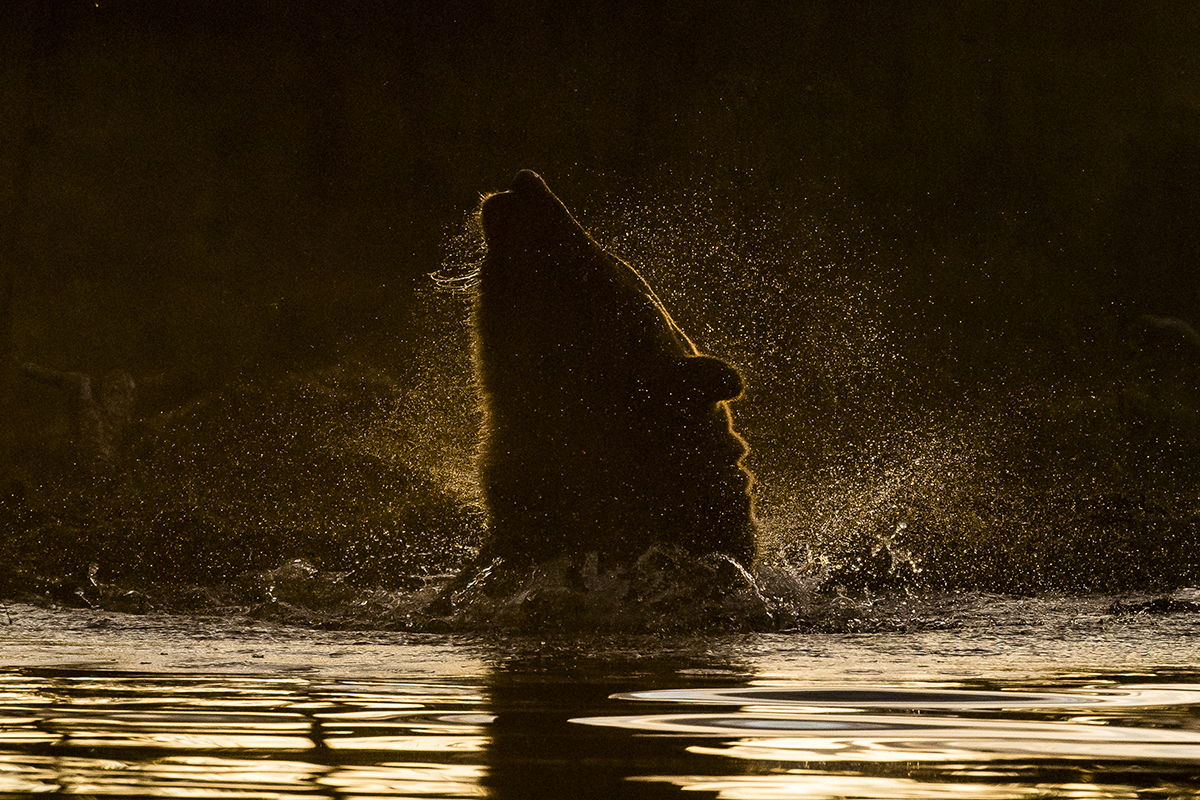 Roger Brendhagen Wildlife Photography