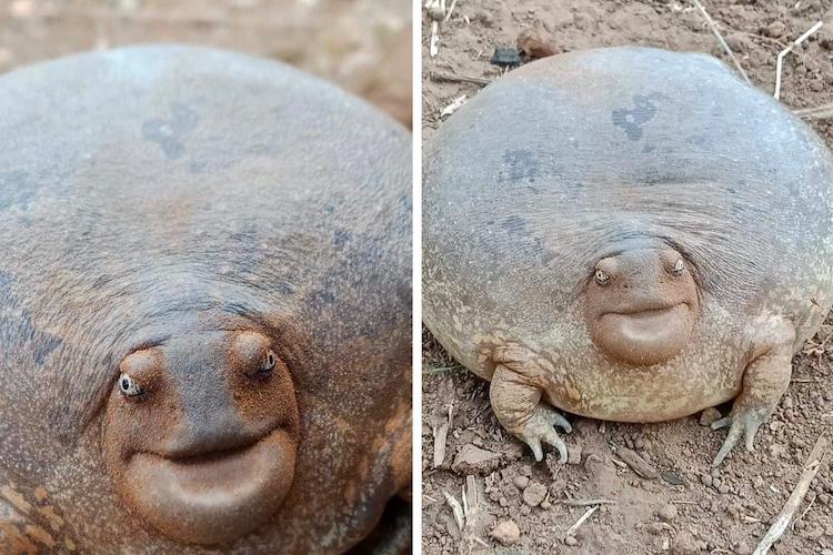 Amazing Cute Frog