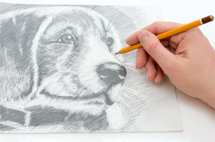 Best Animal Drawing Books