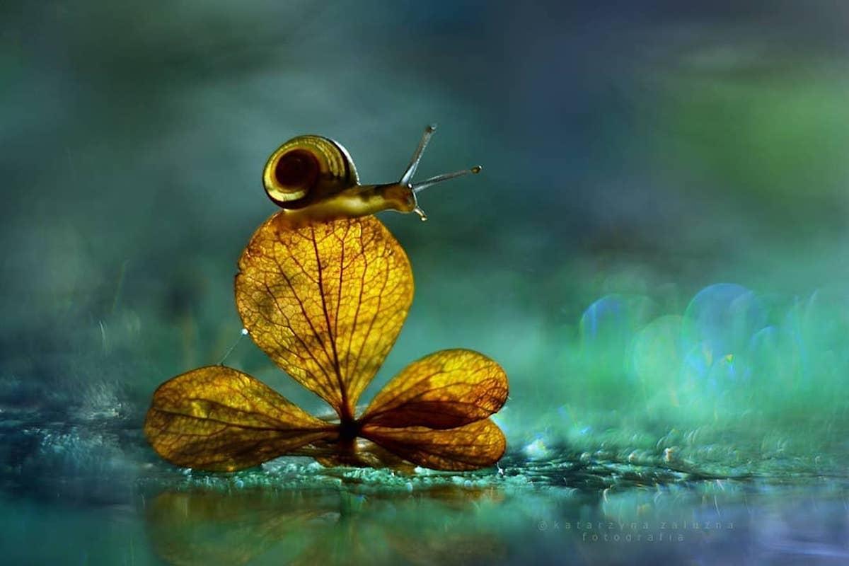 Snail Photography Using Bokeh Effect