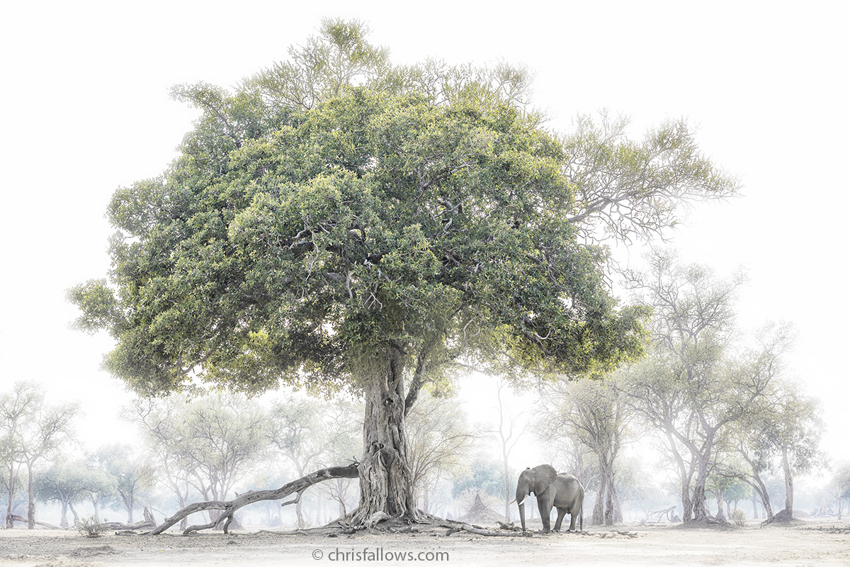 African Elephant Photography