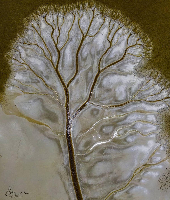 Tree of Life Derry Moroney Lake Cakora