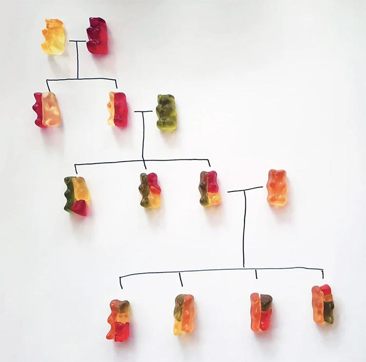 experimento genetica osos de gomita