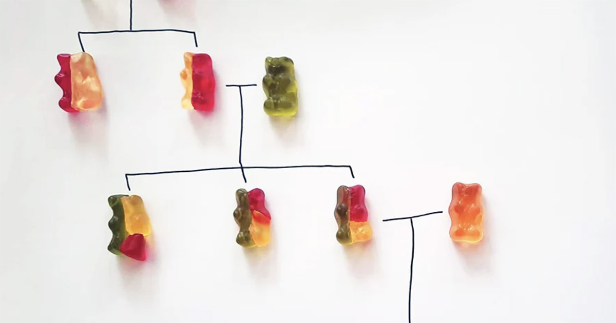Learn Genetics Quickly With This Simple (and Sweet) Gummy Bear Experiment