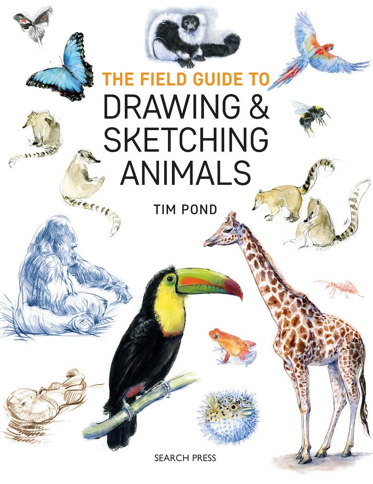 How to Draw and Sketch Animals