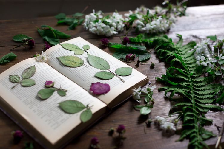 Press Flowers Using a Book