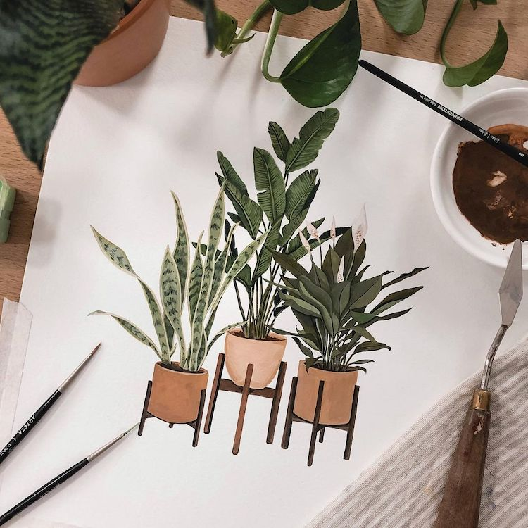 Plant Illustrations by Rosa F