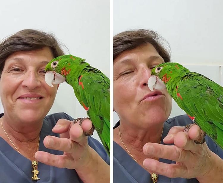 Parrot Prosthetic Reconstruction