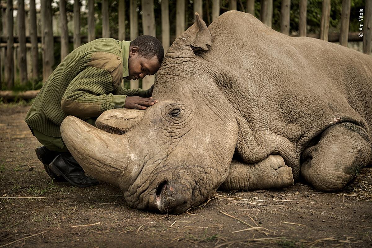 Sudan White Male Northern Rhino Ami Vitale