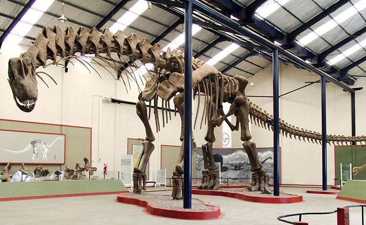 Recreación de fósil de Argentinosaurus